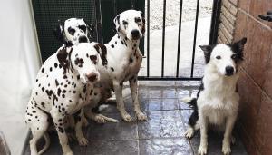 Bañando a los perros en Granada