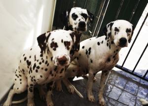 Educando a los perros en Granada