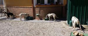 Adiestramiento canino en Granada - Funny Dogs