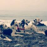 De vacaciones con los perros