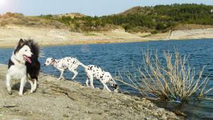 De paseo con mis perros - Funny Dogs