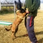 Adiestramiento canino en Granada