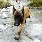 Entrenamiento canino y paseos - Funny Dogs