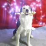 Navidad Funny Dogs Day