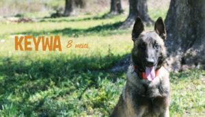 Keywa - Funny Dogs