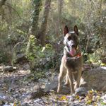 Paseo con mis perros en otoño - Funny Dogs