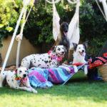 Días de vacaciones con perretes - Funny Dogs
