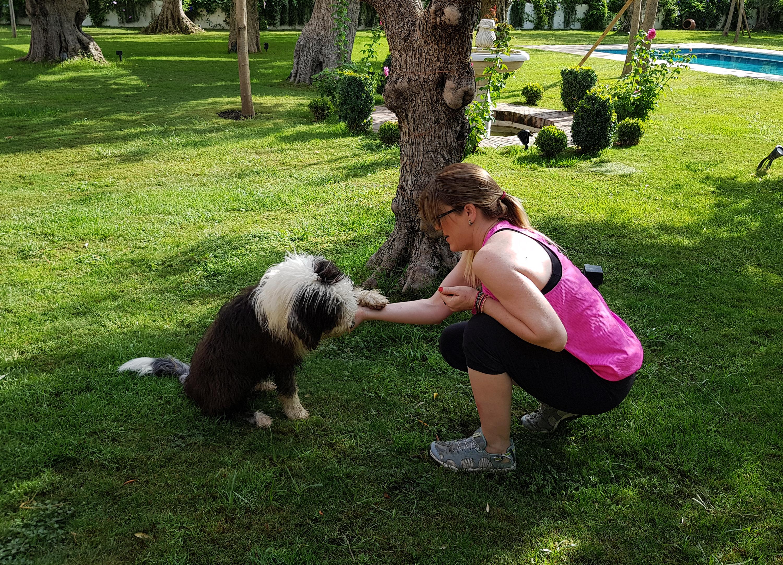 Adiestramiento Canino en Granada - Clases personalizadas