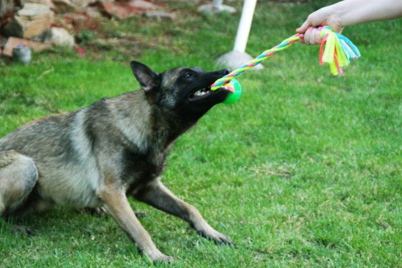Juegos con perros