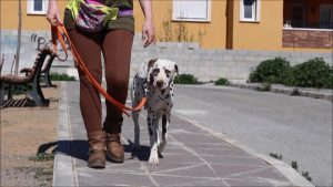 De paseo con el perro