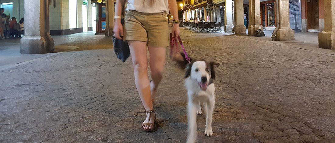 Pasear perro de forma correcta