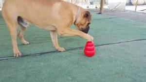 Juguetes adecuados para perros - Funny Dogs