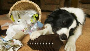 Problemas de ansiedad en perros - Funny Dogs
