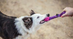 Juego de mordedor - Funny Dogs