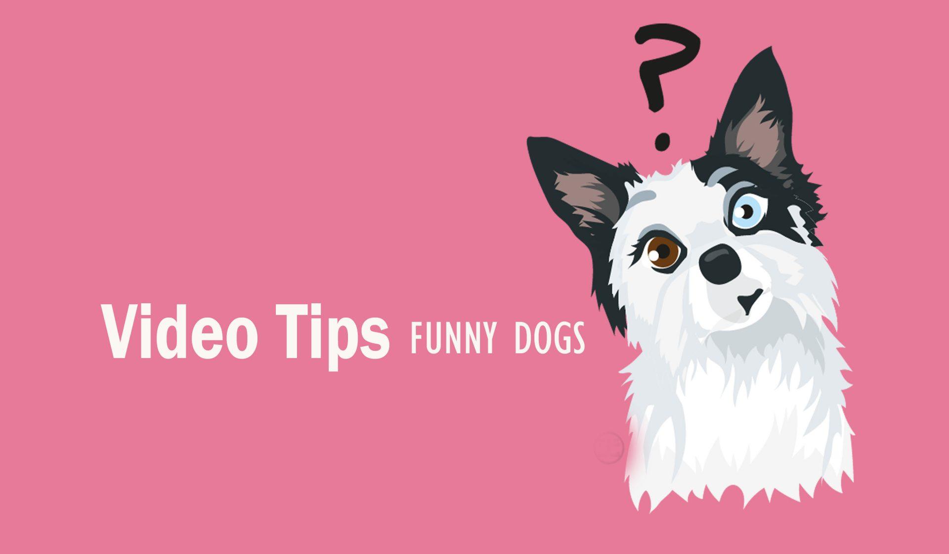 Relaciones entre perros – Vídeo Consejo 1