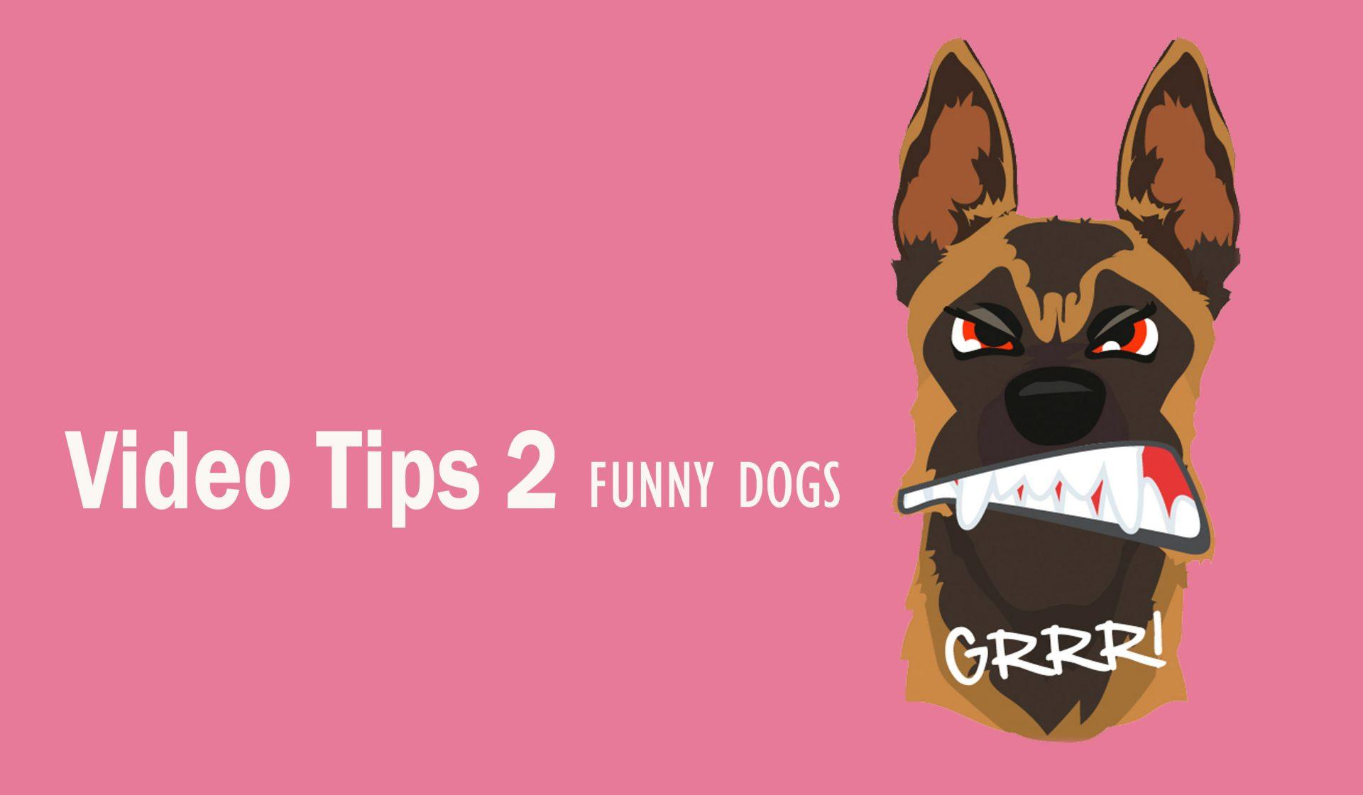 Prevernir mordidas de perros a niños – Vídeo Consejo 2