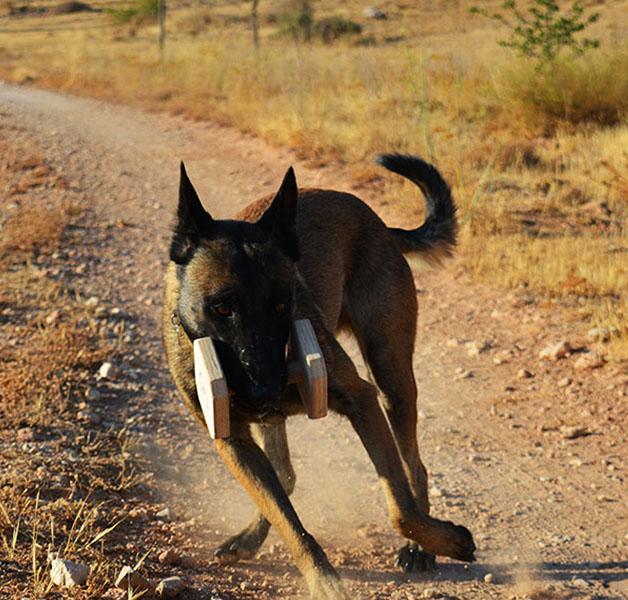 Curso Adiestrador Canino Profesional en Granada