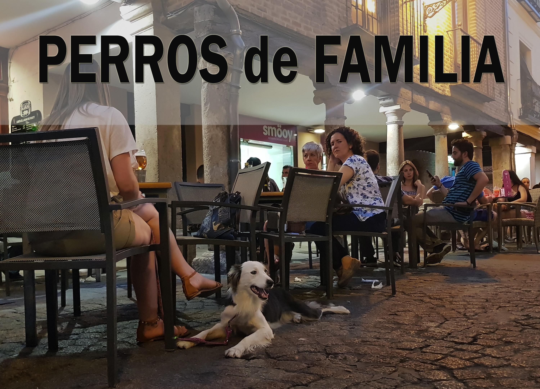 Adiestramiento Canino en Granada - Cursos de Formación Canina