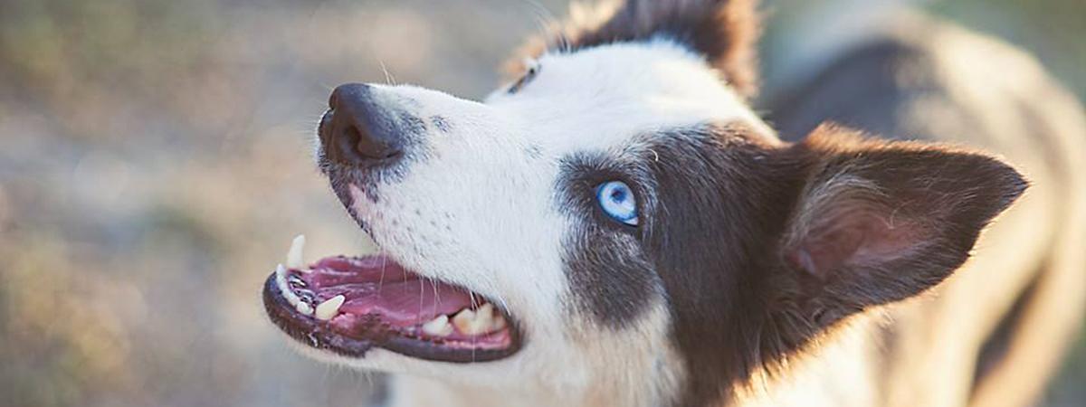 Educación y adiestramiento canino en Granada