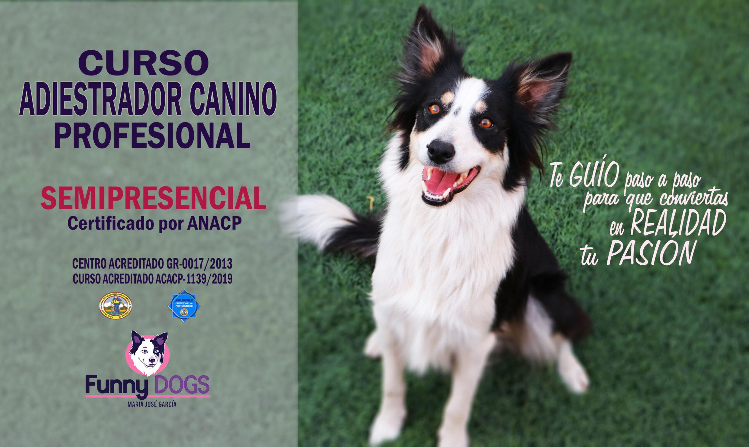 Cursos de Educación Canina y Adiestramiento de Perros en Granada